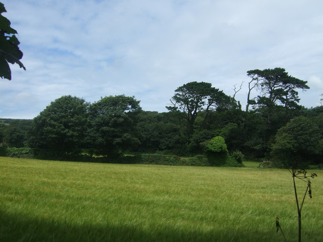 Cereal crop and woodland