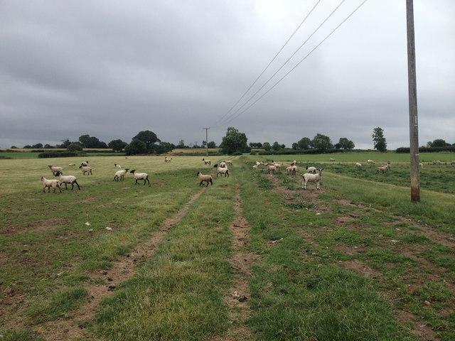 Bridleway to Linton