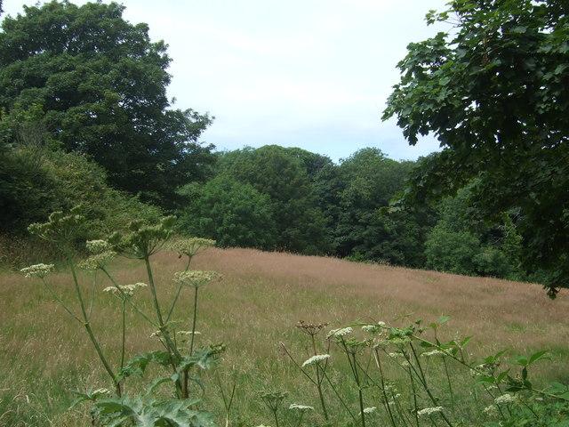 Grassland and woodland near Drift
