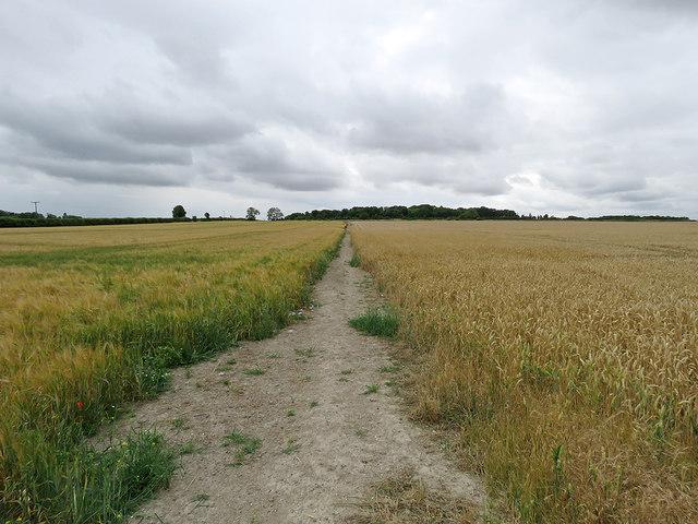 Barley, wheat and White Hill