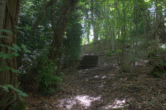 Steps in the wood near Icehouse Combe