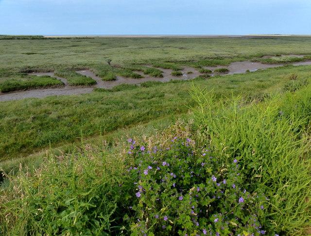 Salt marsh at the Holme Dunes National Nature Reserve