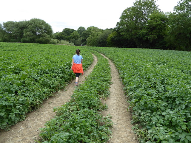 Track across a potato field near the River Severn