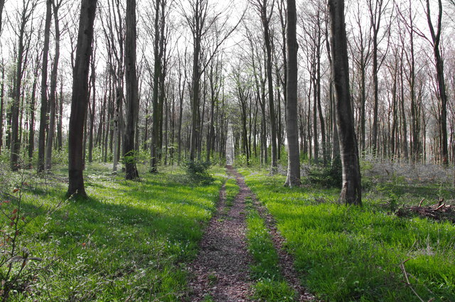 Path Through Vernditch Chase