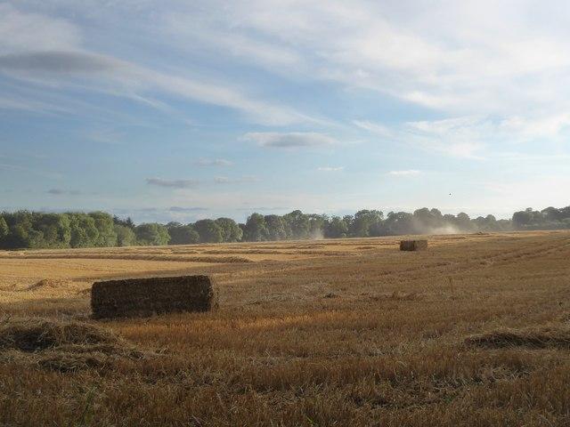 Harvest-time at Ashampstead (2)