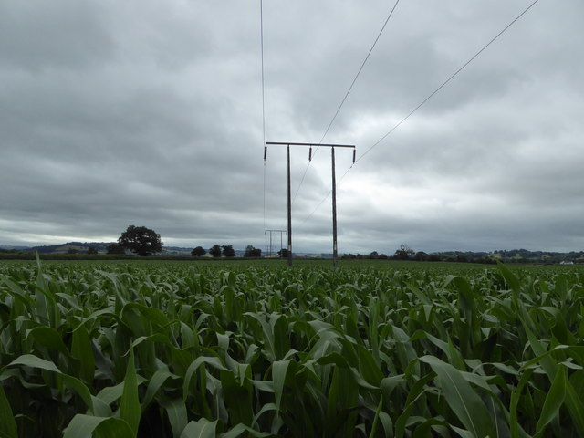 Power lines in a maize field in the floodplain of the River Severn