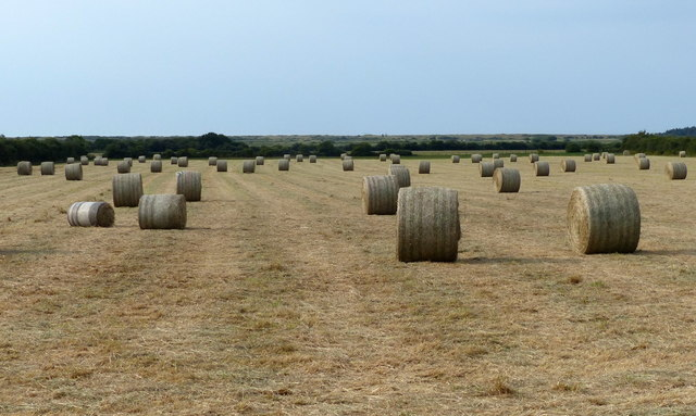 Bales in a field near Holme next the Sea