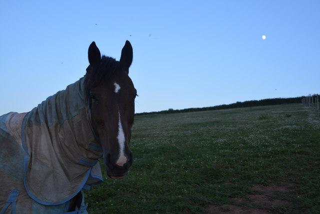 Mid Devon : Grassy Field & Horse