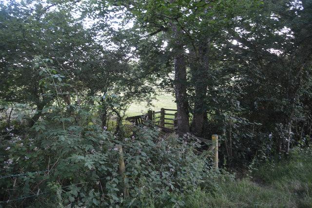 Mid Devon : Grassy Field & Path