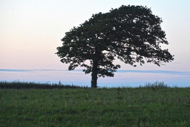 Mid Devon : Grassy Field & Tree