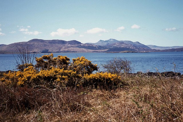 Whin blossom by the Sound of Mull