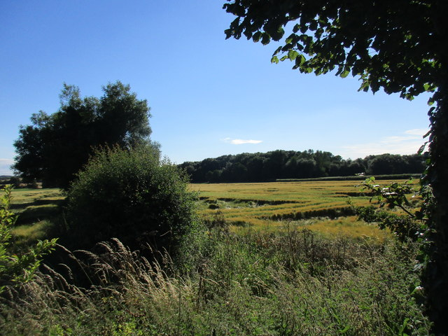 Hedgerow and unnamed plantation