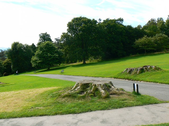 Tree stumps, Plas Newydd, Llanfairpwll, Anglesey