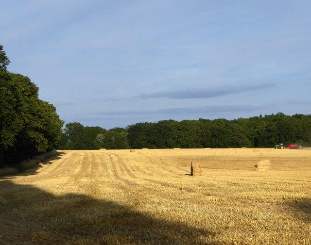 Harvest-time west of Ashampstead