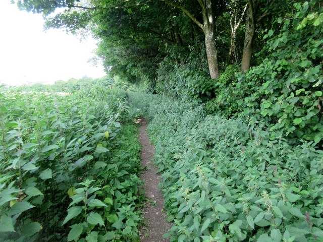 Bridleway through nettles