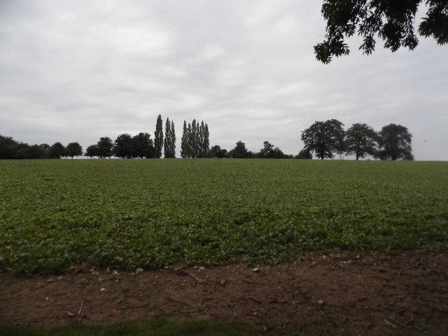 Field in Jockey End