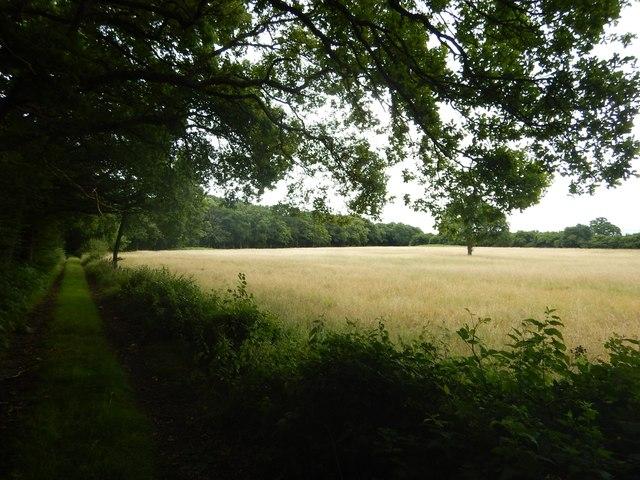 Farm Track near Rye Grove