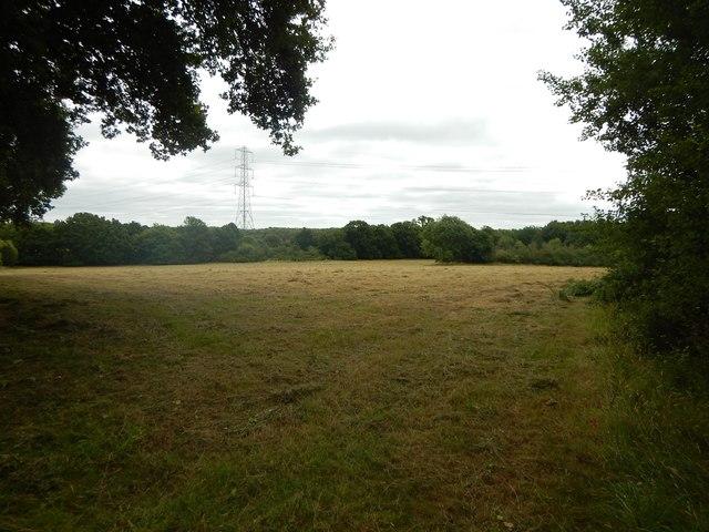 Field with Pylons near Halebourne Lane