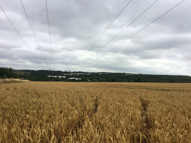 Corn Field and Pylons near the A57 Road