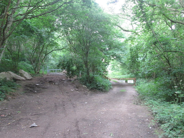 Track junction in Birkhill Wood