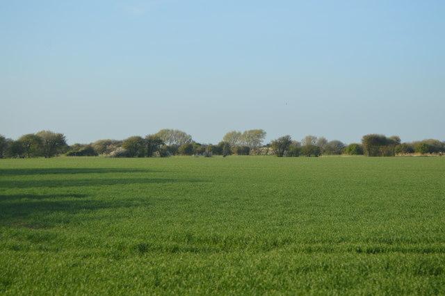 Field near Hammond's Corner
