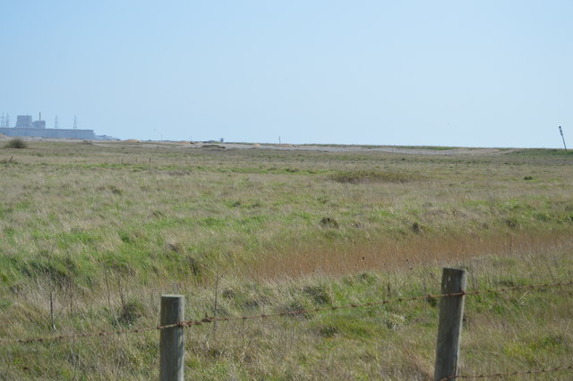 Grasses, Dungeness