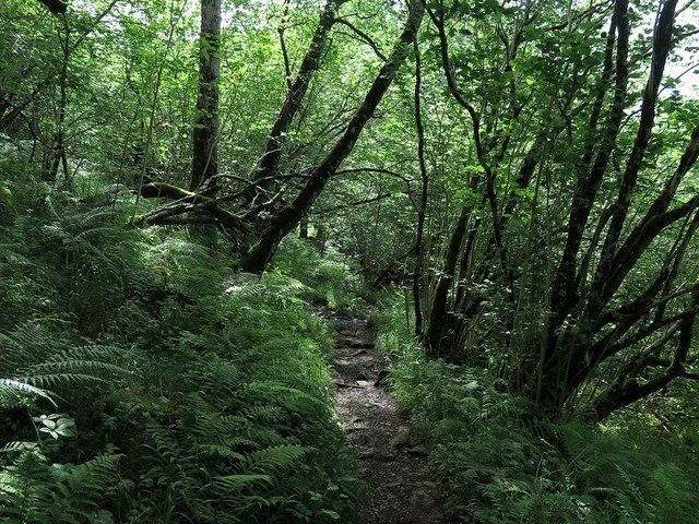Footpath to Falls of Cruachan