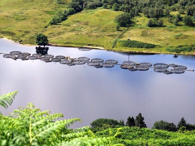 Fish farm, Loch Awe