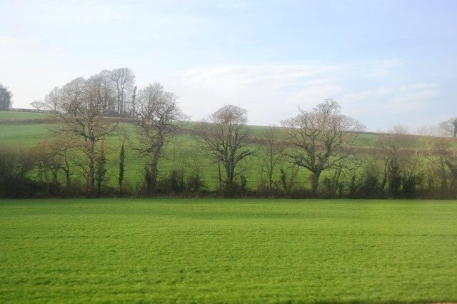 Trees, Aller Brook