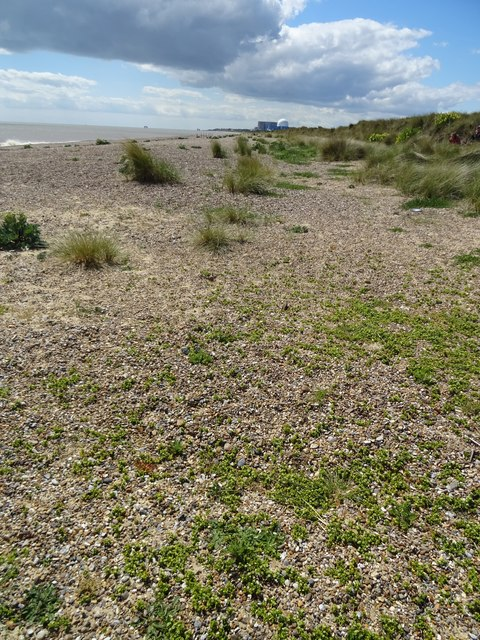 Beach at Minsmere Sizewell B power station in distance