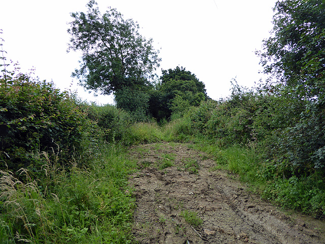 Cole's Lane near Yetminster
