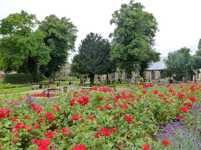 Roses in St Peter's & St Paul's Church gardens, Wisbech