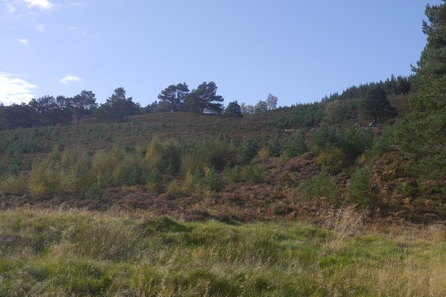 Woodland regeneration, Glen Feshie