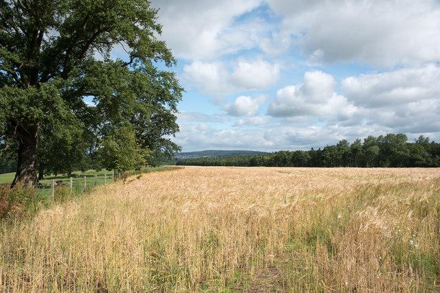 Barley field at Newtown Paddocks
