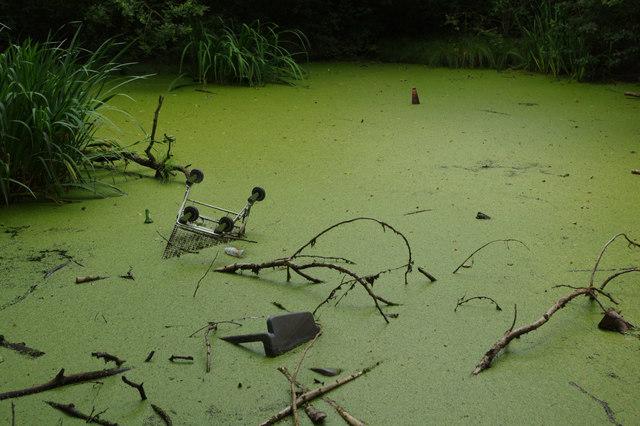 Pond - Tilehill Wood