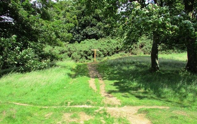 Junction of paths near Bishop Hill, Lomond Hills