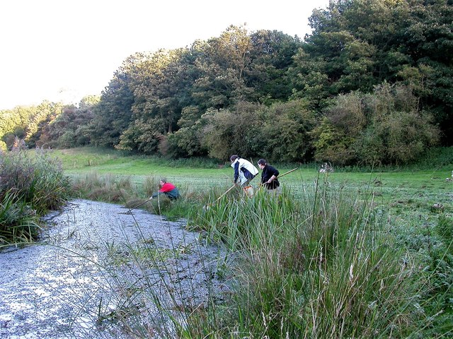 Surveying for amphibians in Ladywell Stream