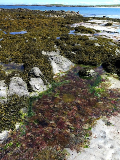 Rock pool, Vaul Bay