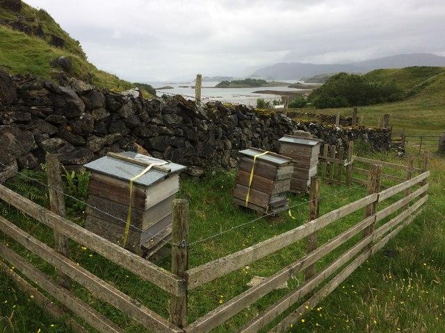 Beehives at Fennachrochan