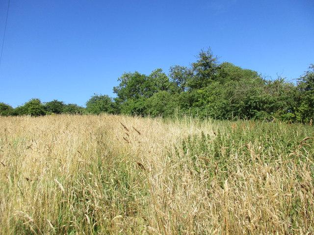 Path through the long grass