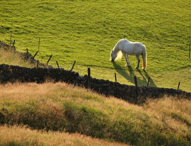 White horse at Mitchell Field