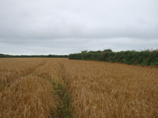 Tracks in a crop field near St Erth Praze