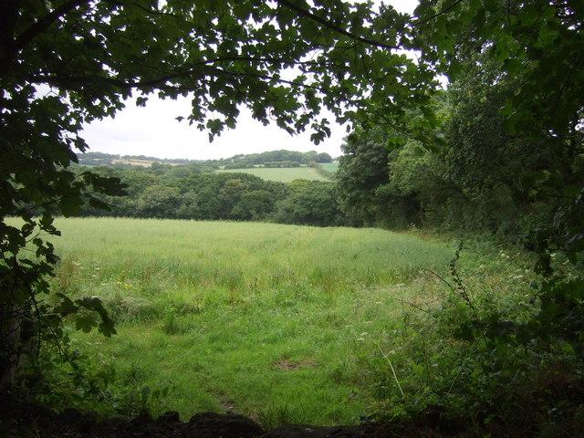 Crop field near Godolphin Cross