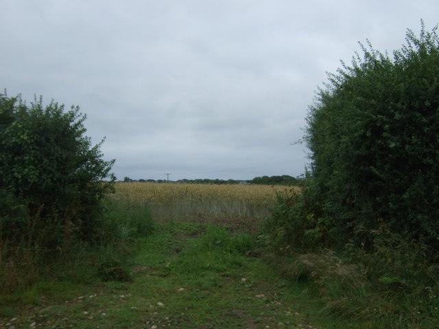 Field entrance near Penhale-an-drea