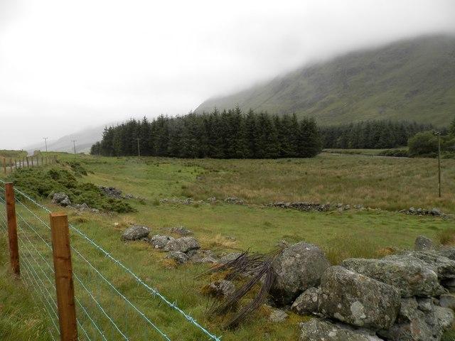 Remains of fank, Glen Clova