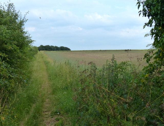 The Peddar's Way heading south towards Fring