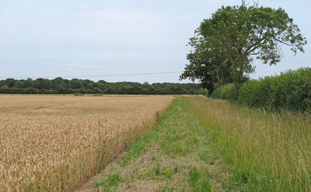 Field Margin on Wheat Field near Belgrove Farm, Henstead