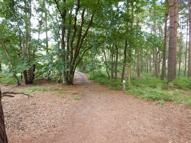 Footpath Meet in Pipe Woodland
