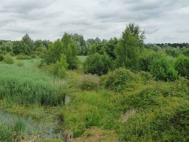 Open woodland in the valley of the River Lark