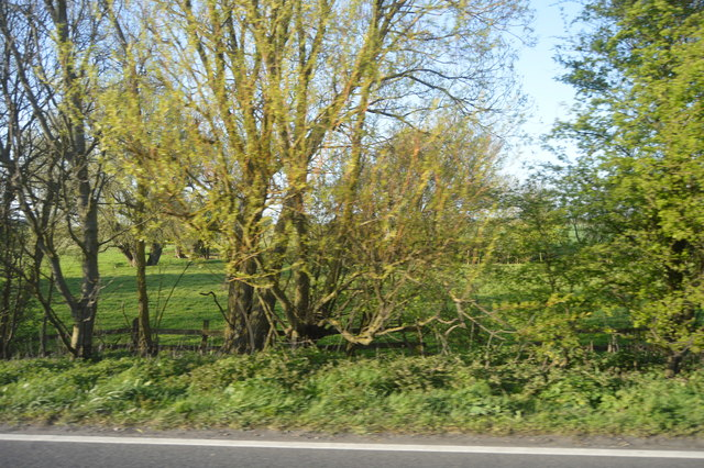 Roadside trees, A259